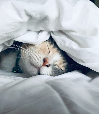 Cat sleeps peacefully on white sheets